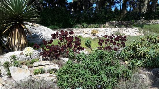 Milieu rocailleux photo de jardin georges delaselle le for Jardin georges delaselle