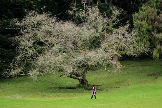 Cibodas, Индонезия: Sakura