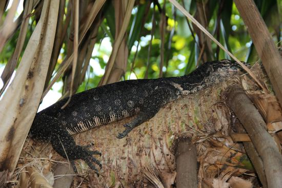 Borneo Divers Mabul Resort: Hotel grounds