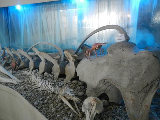 Corfu Shell Museum