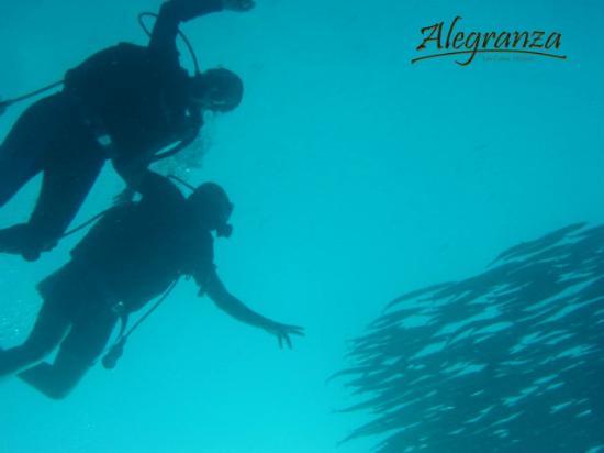Alegranza: Scuba diving