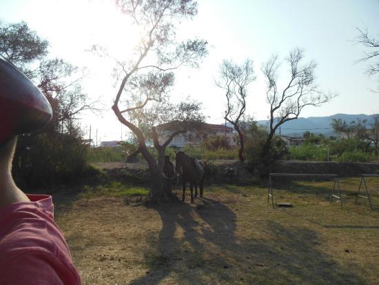 Roda, Yunani: tied up in the sun