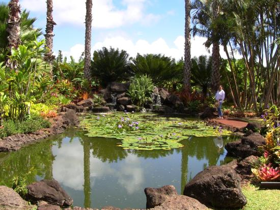 Large koi pond picture of dole plantation wahiawa for Large koi pool