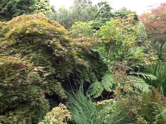 Oadby, UK: Foliage