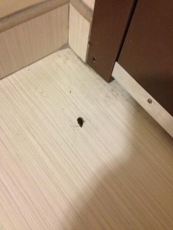 Hampton Inn & Suites Sandusky / Milan: Dead bug by entrance to door