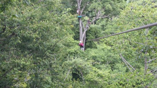 Chiclets Tree Zipline : A far away platform.