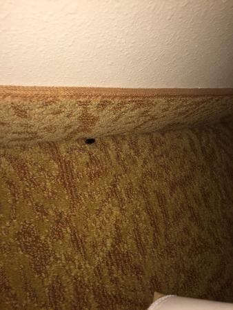 Country Inn & Suites By Carlson, Rochester South, MN : photo0.jpg