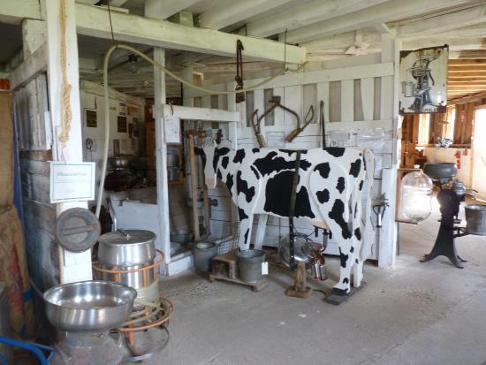 Gagetown, MI: Dairy in Barn