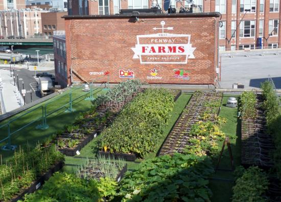 Fenway Park: Rooftop Garden For Use In On Site Restaurant