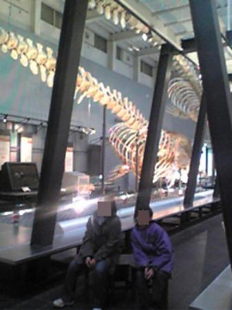 Ashoro Museum of Paleontology