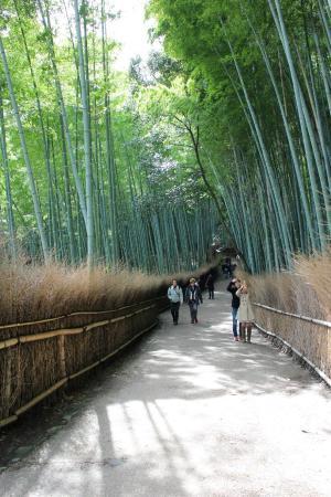 Sagano: Arashiyama Bamboo Forest