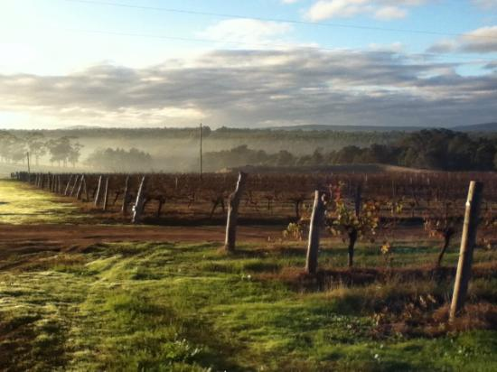 Mount Barker, Australia: Galafrey Wines beautiful vineyard