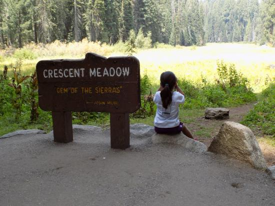 Lodgepole Campground: Saw 5 bears on this walk
