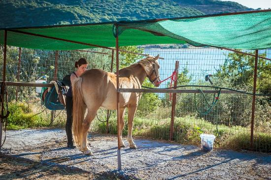 Ippos Horse Riding and Excursions