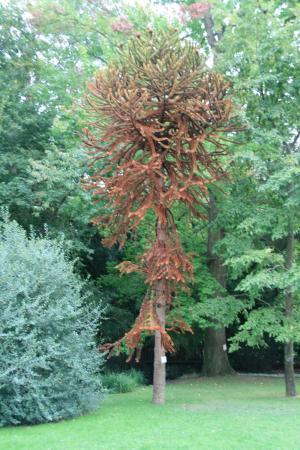 Foto de jardin botanique de tours tours araucaria for Jardin botanique tours