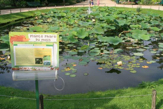Pelouse publique picture of jardin botanique de tours for Boulevard jardin botanique