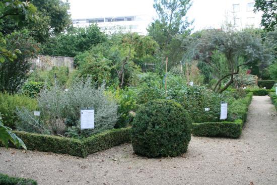Pelouse publique picture of jardin botanique de tours for Jardin botanique tours