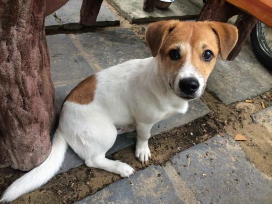 Nature Homestay: Ken, the adorable pup