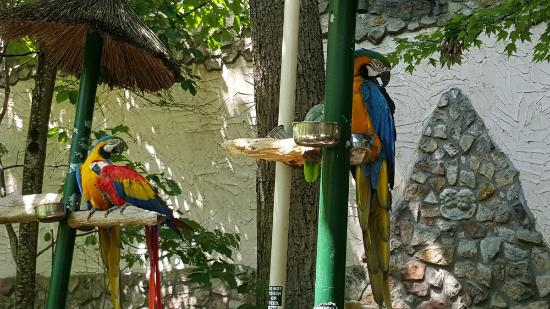 parrot mountain gardens pigeon forge tennessee picture of parrot mountain gardens