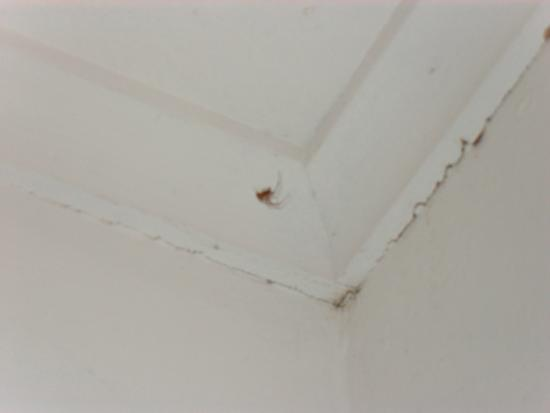 Tallwood Motel: Another spider