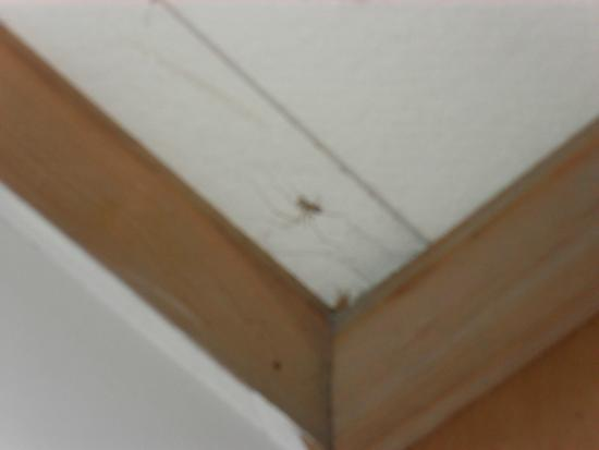 Tallwood Motel: More spiders