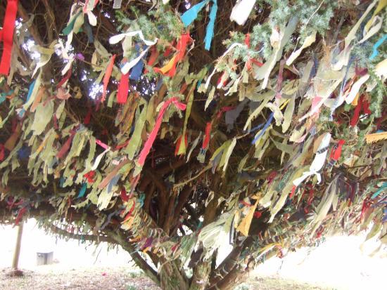 Eskdalemuir, UK: tree