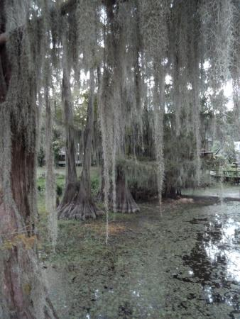 Spatterdock Guest Houses: Haunting beauty of Caddo Lake from Spatterdock pier