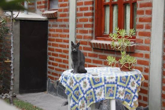Cabañas Tunquelen: La gatita de las cabañas y la mesita del patio