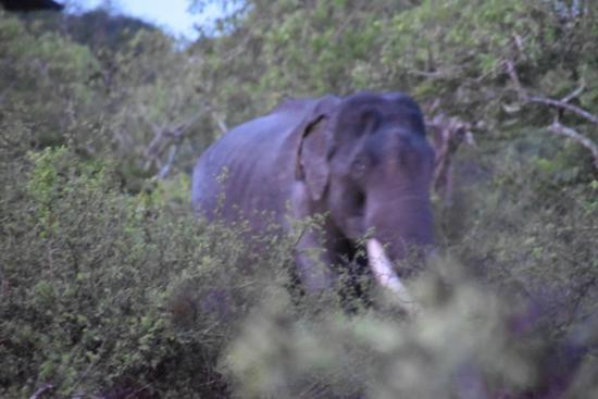The Secret Yala: Safari