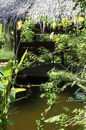Koi ponds all around the property