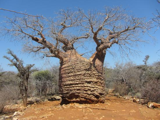 Toliara Province, Μαδαγασκάρη: La Nonna