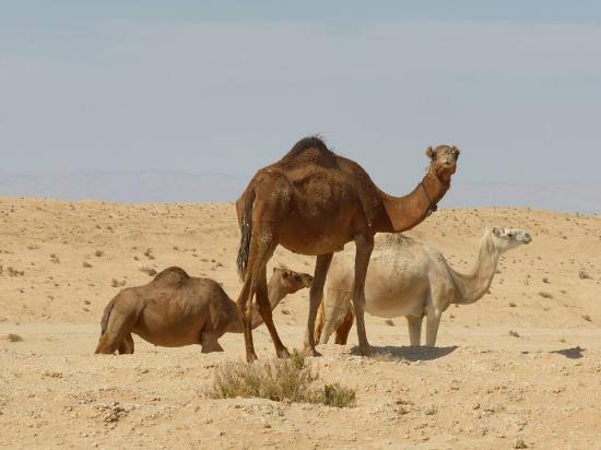 Rencontre celibataire tunisie