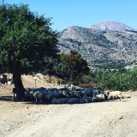Krousonas, Yunanistan: photo0.jpg