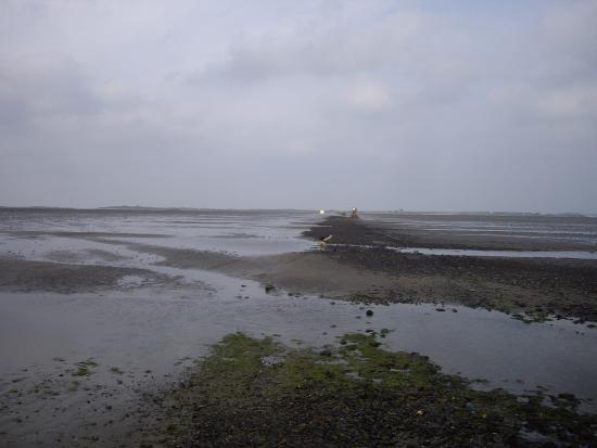 Coney Island: beach crossing