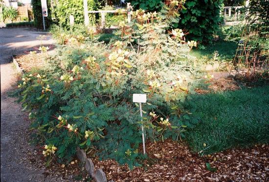 jardin des plantes buisson d 39 oiseaux de paradis photo de