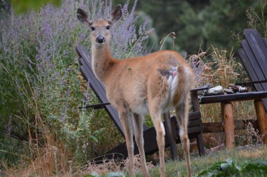 Dominion Mountain Retreat: front yard wildlife