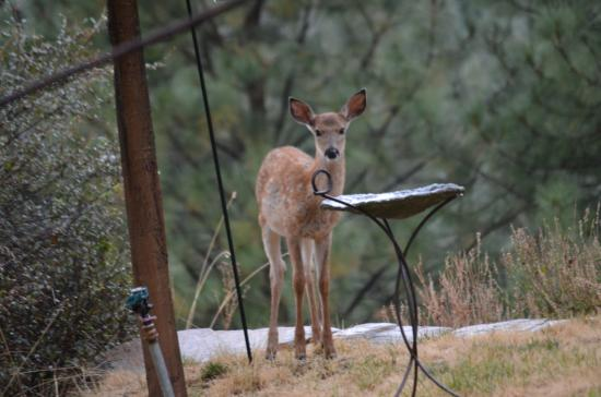 Dominion Mountain Retreat: front yard wildlife
