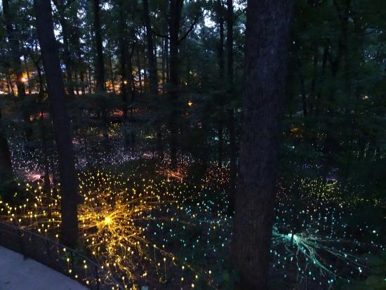 Pretty Picture Of Atlanta Botanical Garden Atlanta Tripadvisor