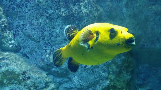 Poisson picture of aquarium de lyon lyon tripadvisor for Poisson de petit aquarium