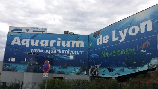 poisson picture of aquarium de lyon lyon tripadvisor