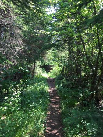 Isle Royale National Park, MI: Hiking trail