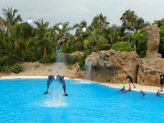 Delfiny picture of loro parque puerto de la cruz tripadvisor - Loro parque puerto de la cruz ...