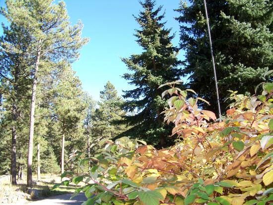 Elk Ridge Bed & Breakfast: Yes...we have fall colors too!