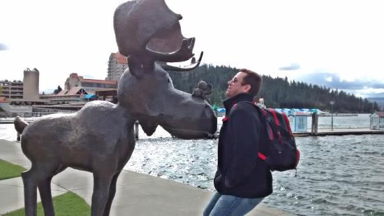 North Idaho Centennial Trail: one of the moose with an informative sign
