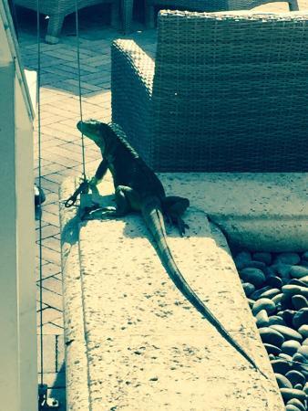 Cioppino at the Ritz-Carlton Key Biscayne: photo2.jpg