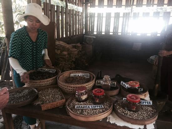 Kopi Luwak B36 - Day Tours