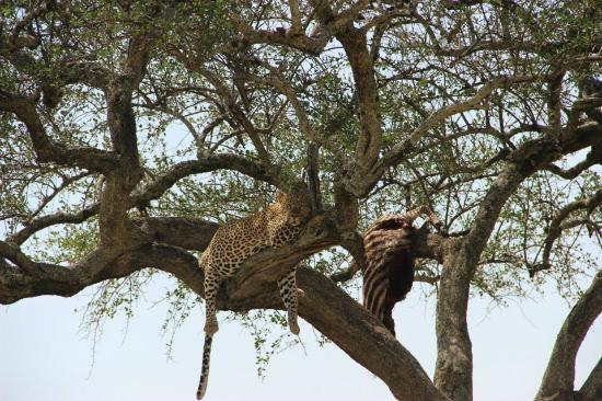 All Seasons Safaris & Tours - Day Tours