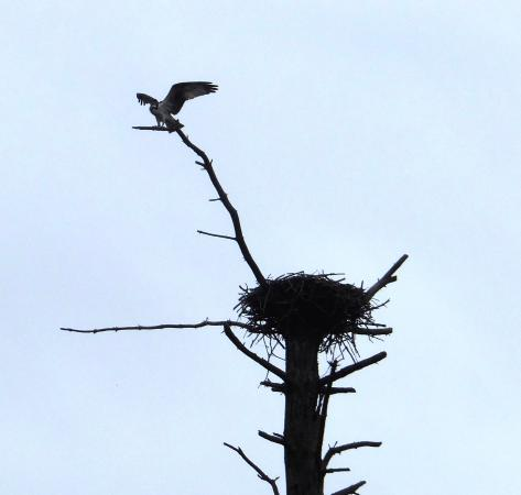 Rochert, MN: Birds at Tamarac Wildlife Refuge