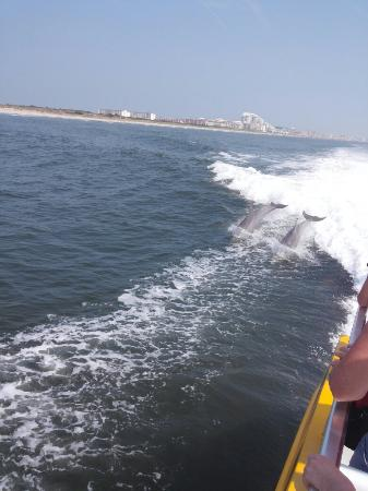 Thundercat Dolphin Watch