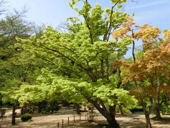 Ashimori : 近水園